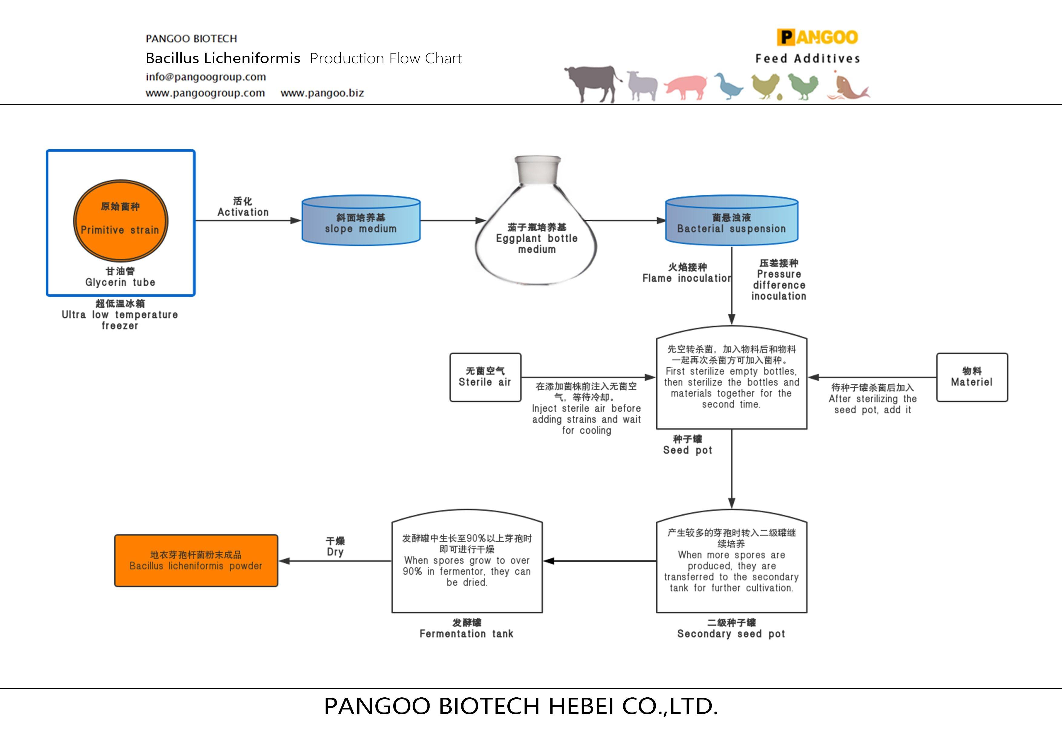 Bacillus Licheniformis Production Flow Chart